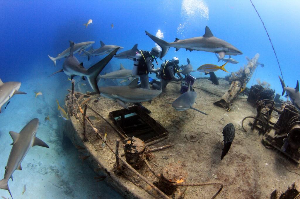 Nassau discover scuba diving - bahamas cruise excursions